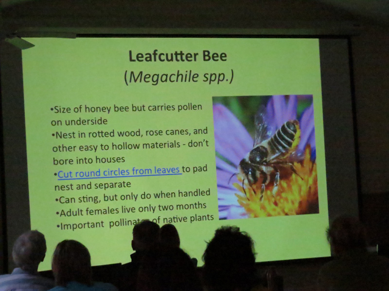 !!2-28-2015-leaf-cutter-bee-slide