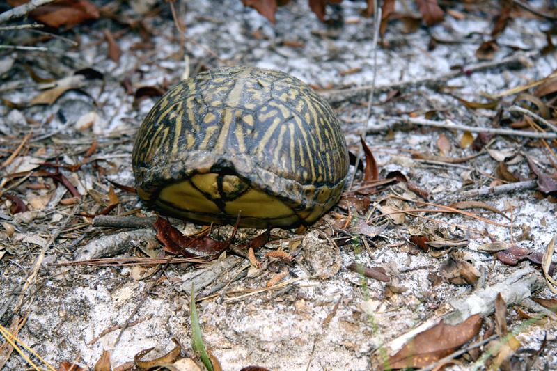 !!turtle-on-sorca