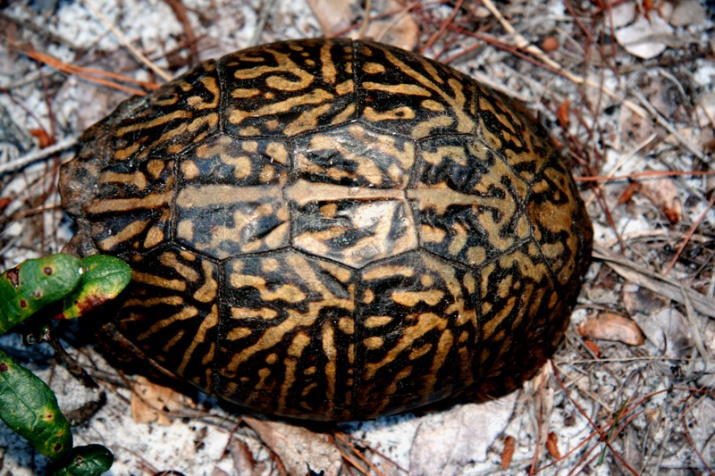 !!!turtle-@-sorca