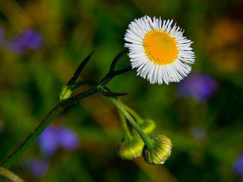 wildflower_workshop_031415_23
