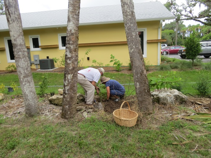 !peter sutherland & susan boyd on 6-13-15 @ AH planting day copy
