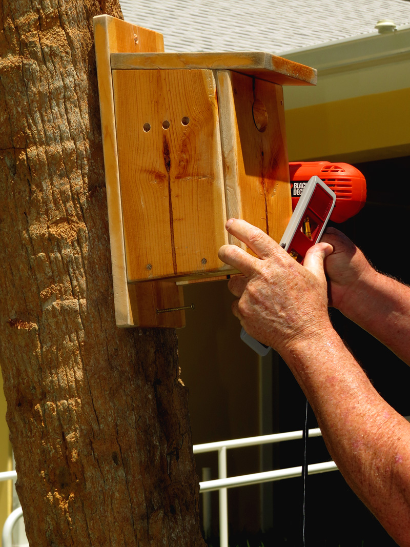 !!!!bluebird-house-installation