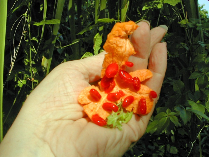 !!!!Momordica-charantia---fruits-&-arils