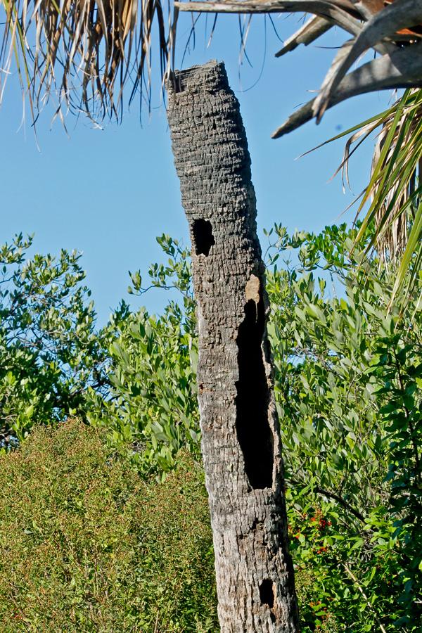 !!!!sabal-wi-woodpecker-hole-by-ks