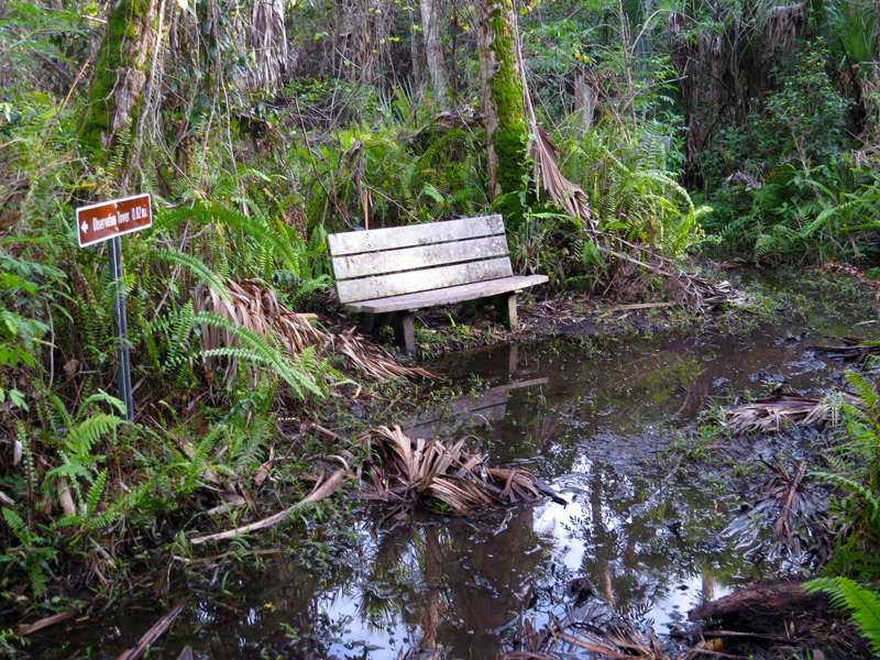 !!!!wet-trail-conidtions-at-bench2