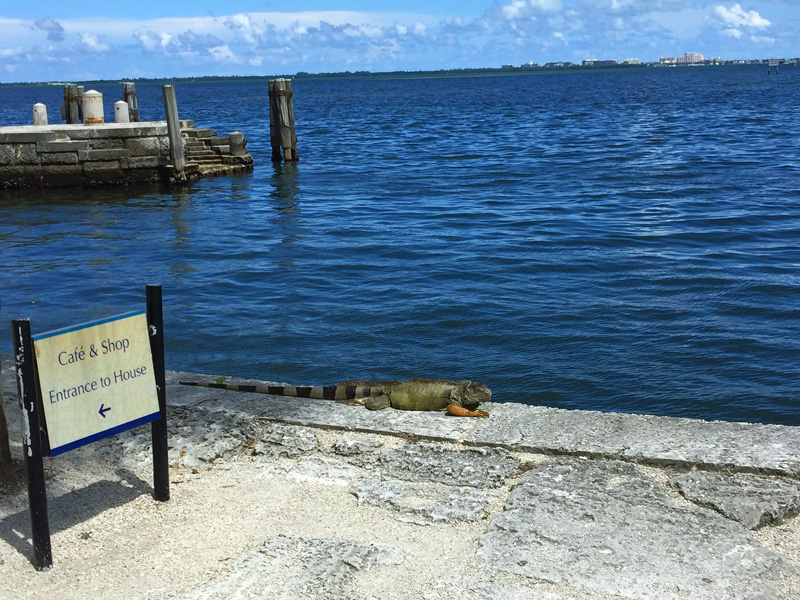 !!!!iguana-at-vizcaya2