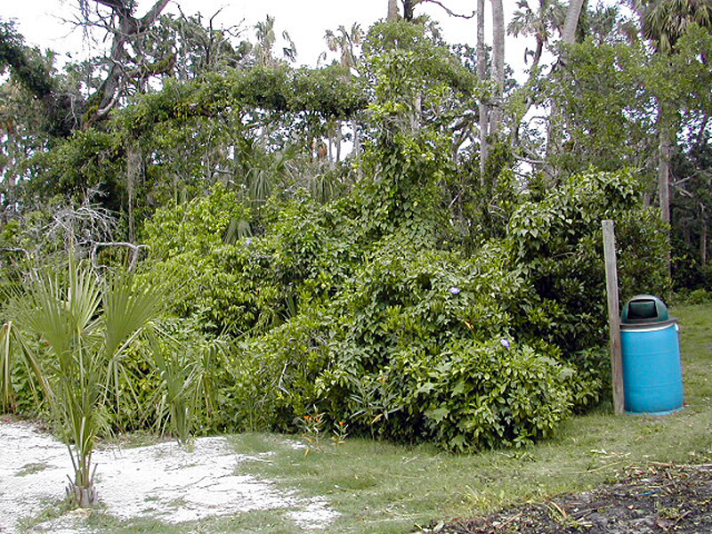 tthurricane-damage-in-2005